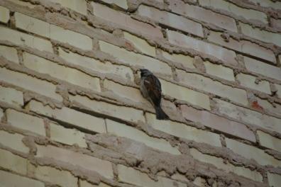 wall:bird